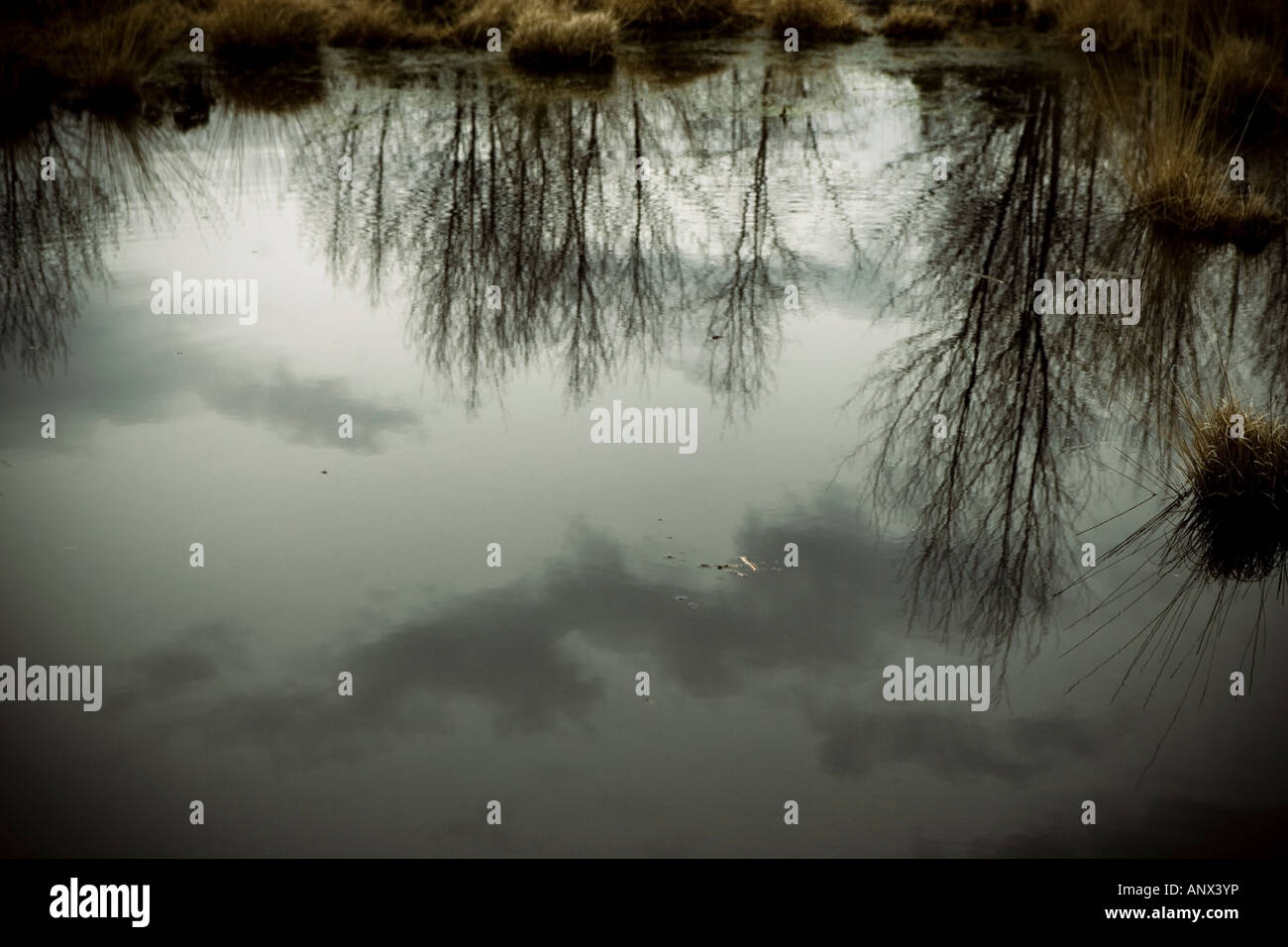 Refections on a wildlife pond in England - Stock Image
