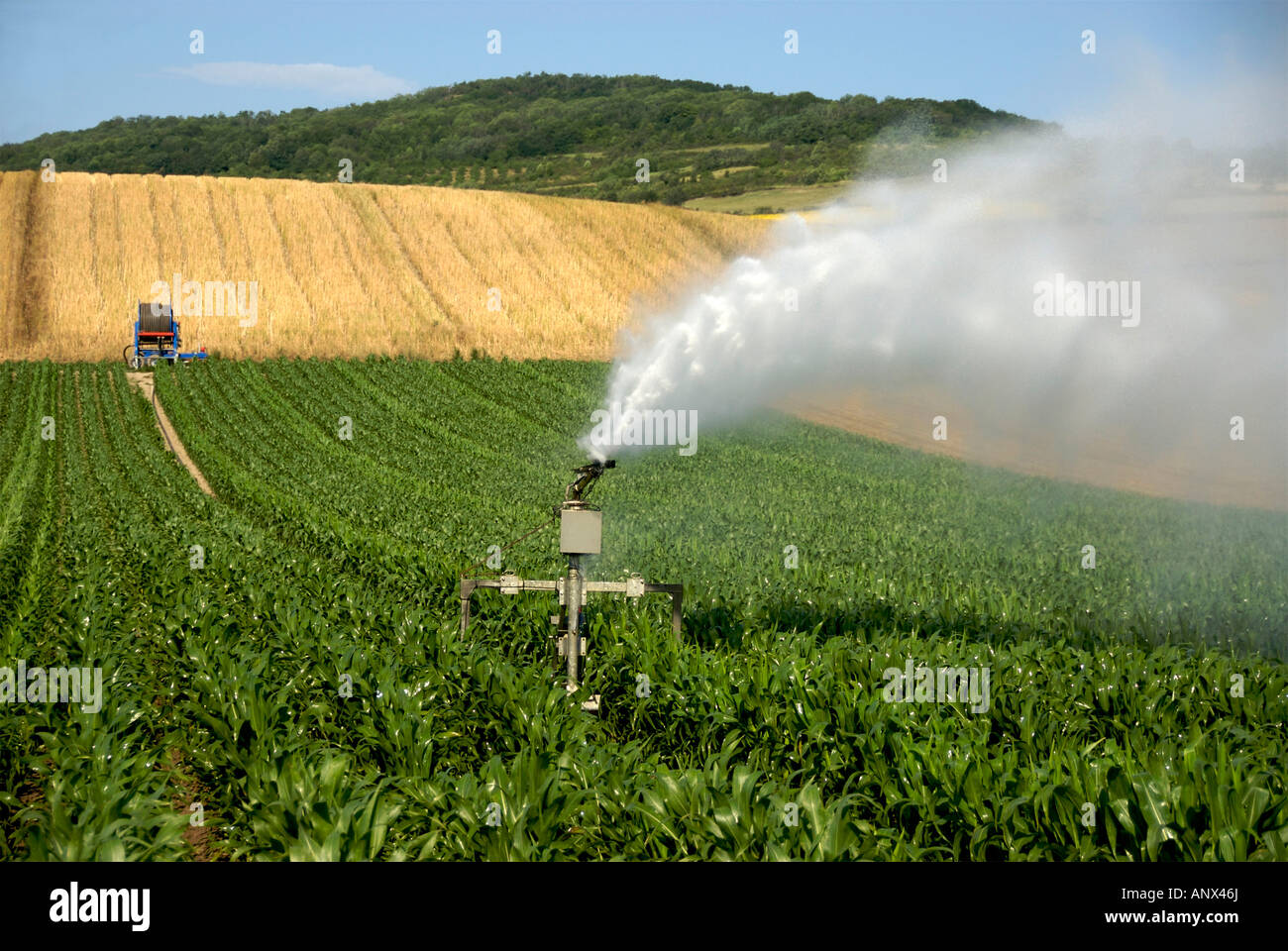 Sprinkler installation irrigating a field of maize in France, Europe - Stock Image