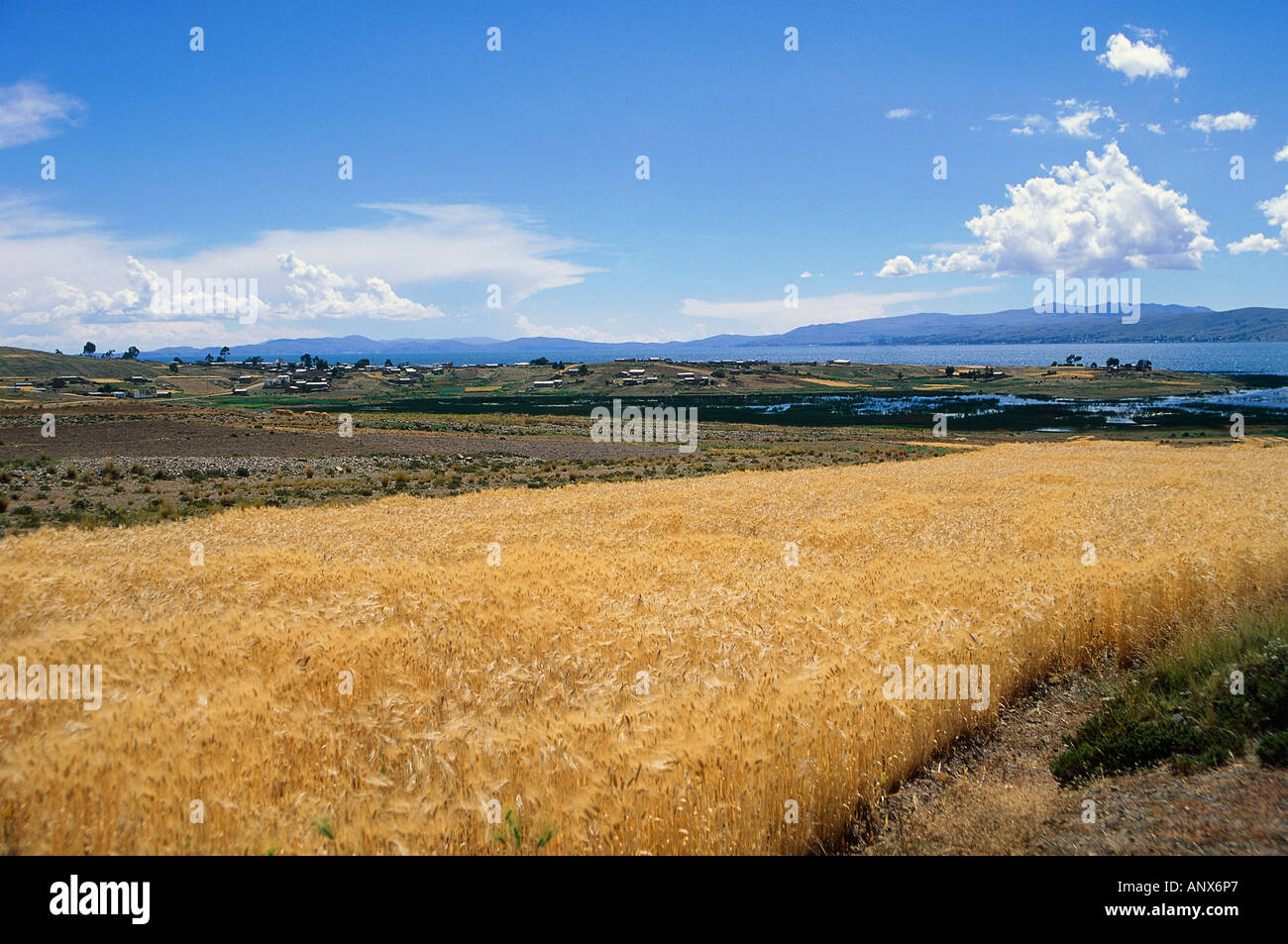 peasant houses agricultural crops lake titicaca border area of peru and bolivia - Stock Image