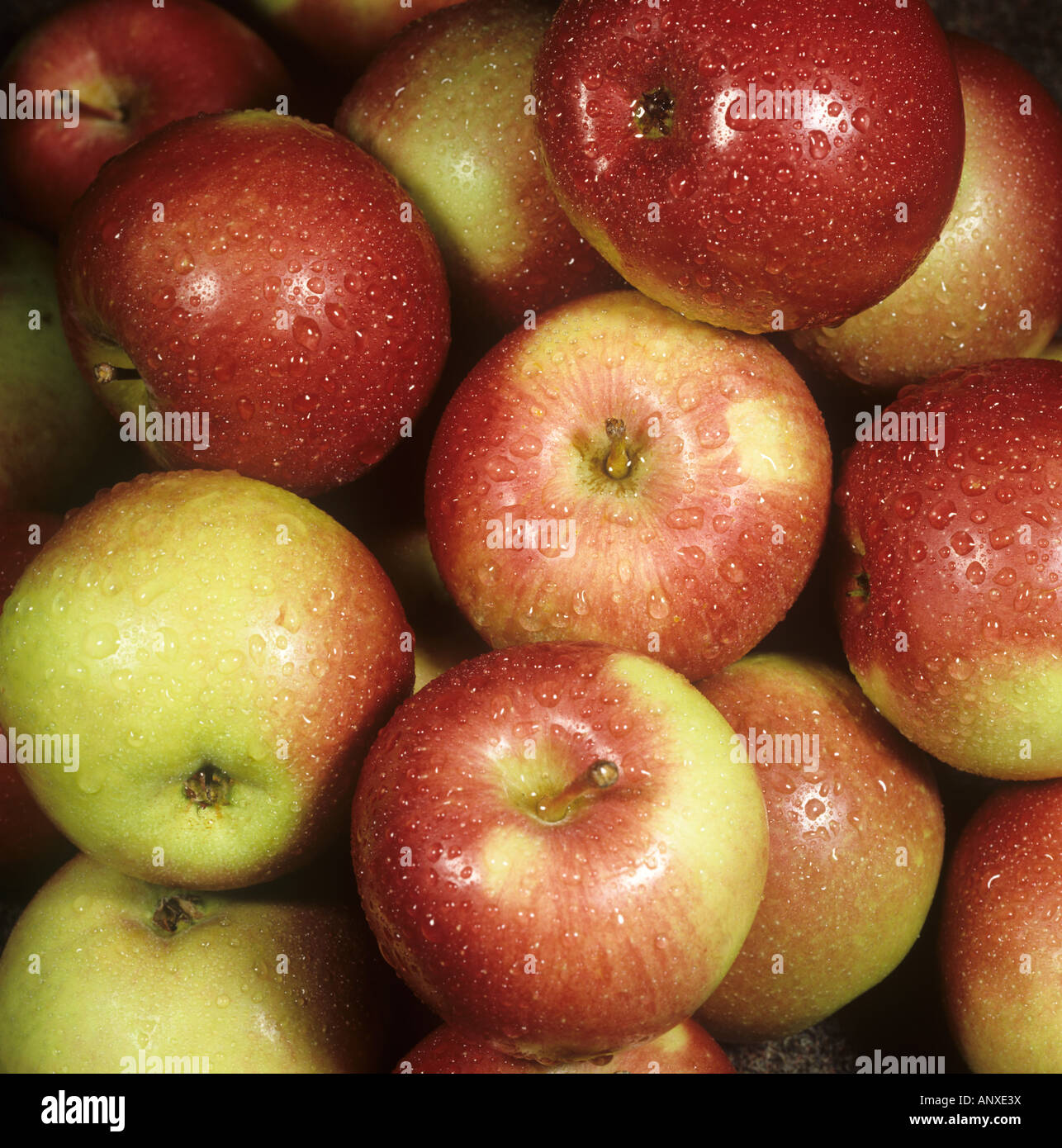 Harvested Canadian apples as bought from a supermarket - Stock Image