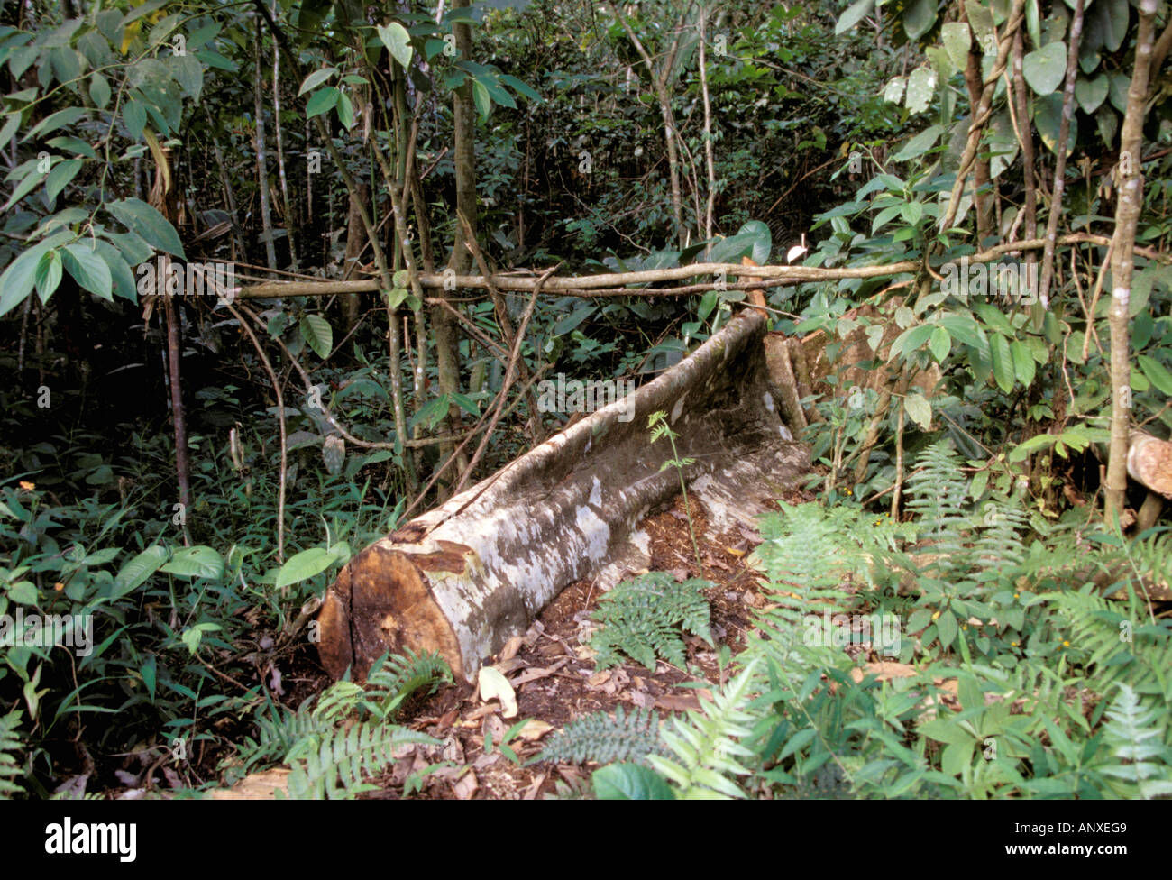 Asia, Indonesia, Sulawesi, Minahasa, Ilo Loi Forest. Track where logs are dragged out of forest - Stock Image