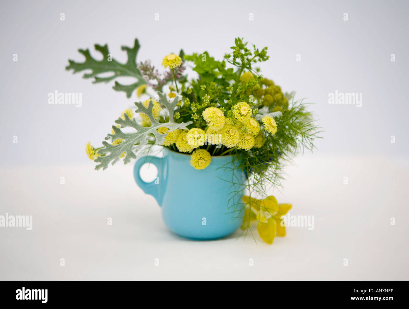 Flowers in a blue china teacup - Stock Image