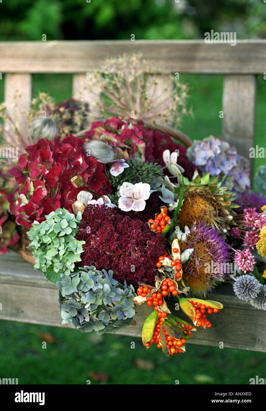 A SELECTION OF DRIED FLOWERS FROM STOURTON HOUSE FLOWER GARDEN Stock ...