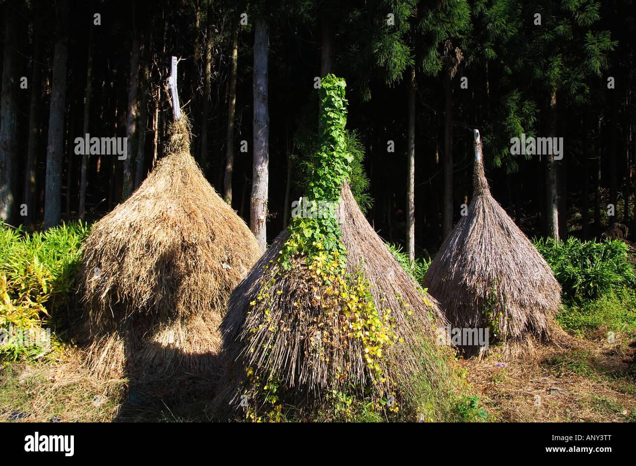 Japan, Honshu Island, Gifu Prefecture, Shirakawa-go. A Unesco World Heritage Site of 'Gassho Zukkuri' . - Stock Image