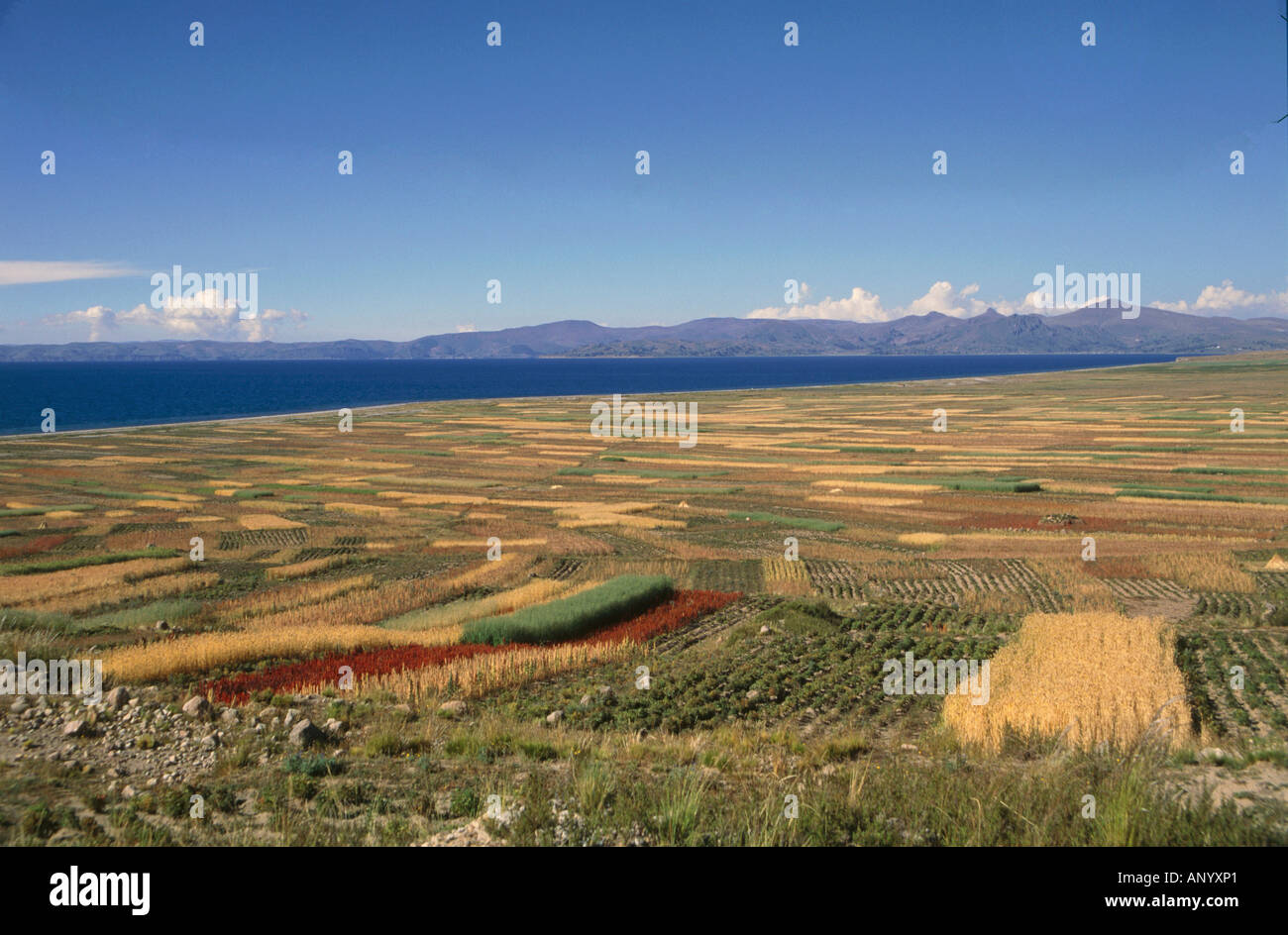 patchwork of agricultural crops lake titicaca border area of peru and bolivia - Stock Image