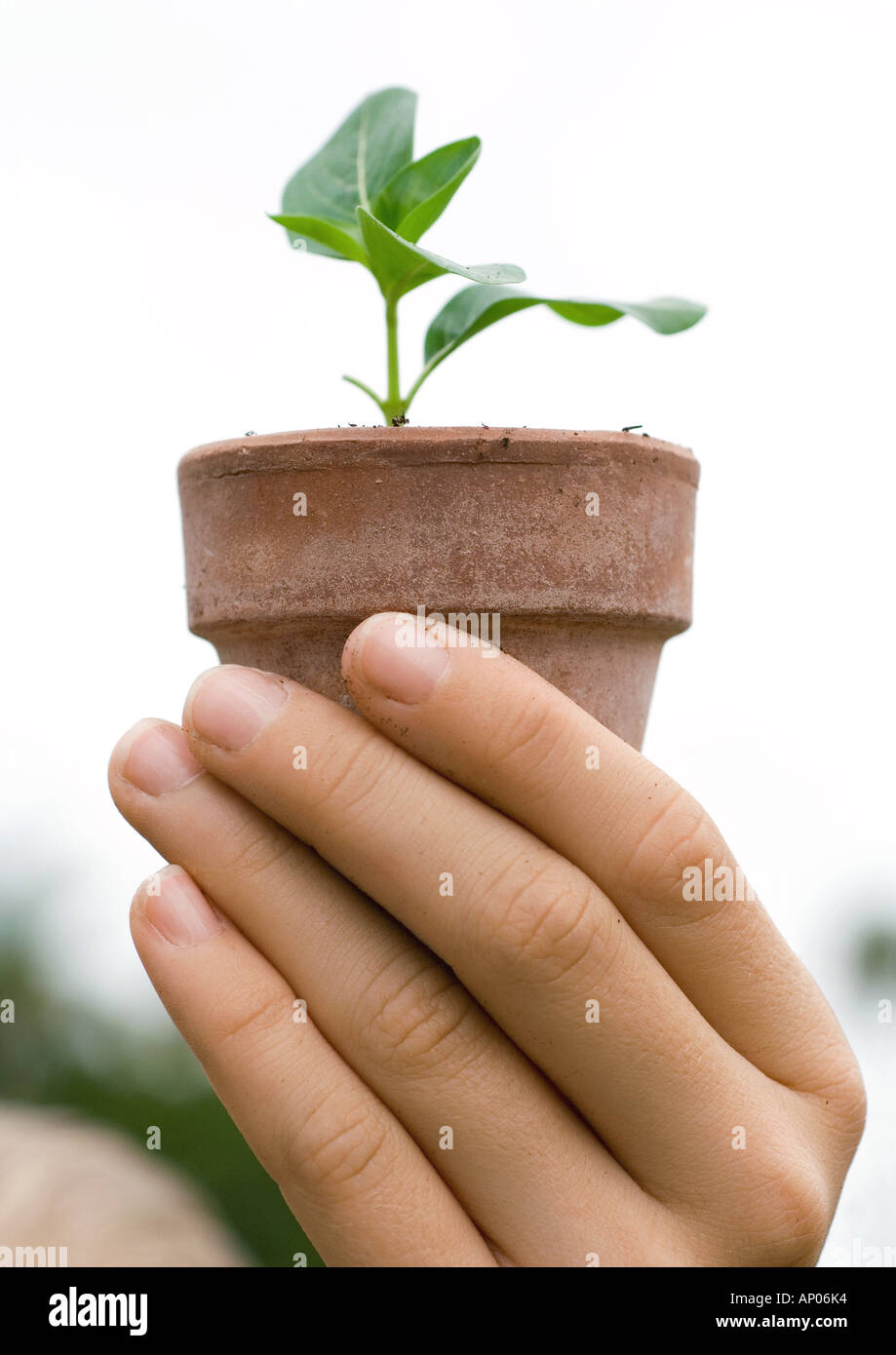 Hand holding potted seedling - Stock Image