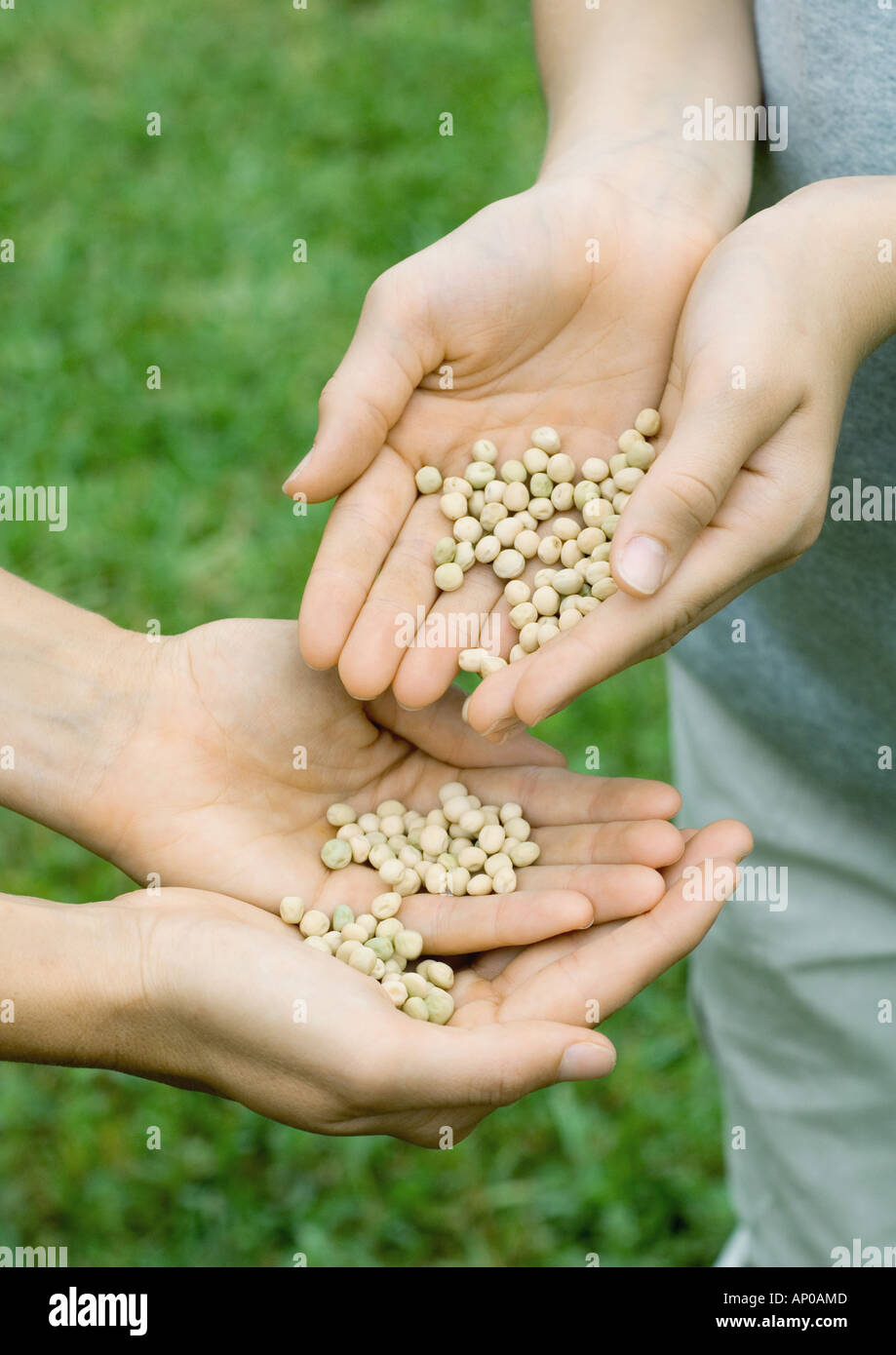 One person pouring seeds into second person's hands - Stock Image