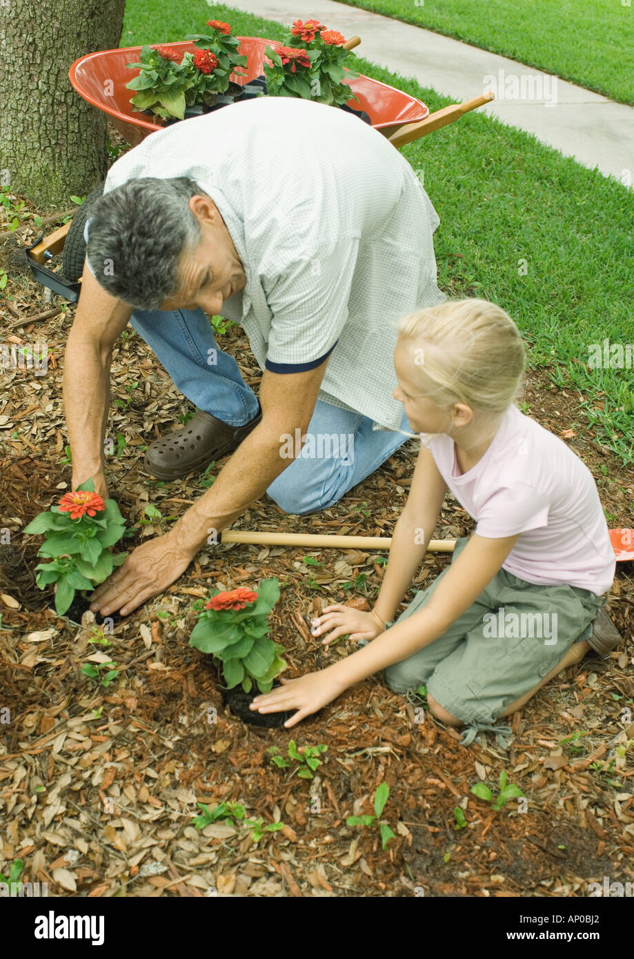 Man and girl planting flowers in yard together - Stock Image