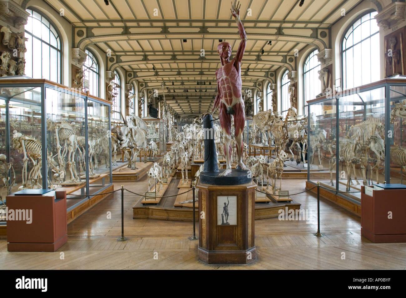 Europe France Paris Austerlitz Museum Of Comparative Anatomy