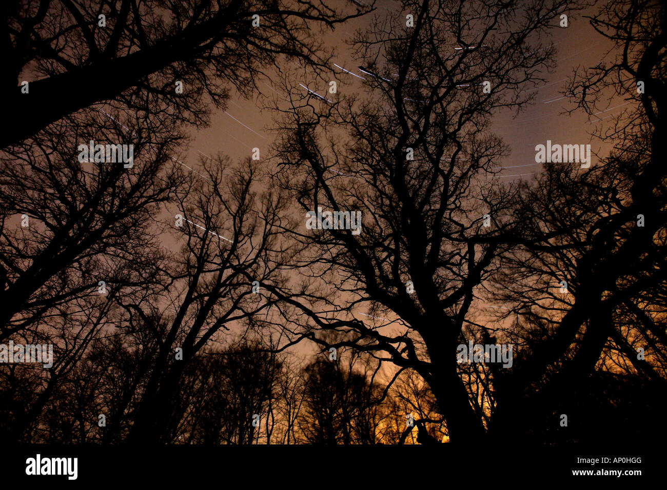 Starstreaks and old trees at Telemarkslunden, a protected forest, in Rygge kommune, Østfold fylke, Norway. - Stock Image