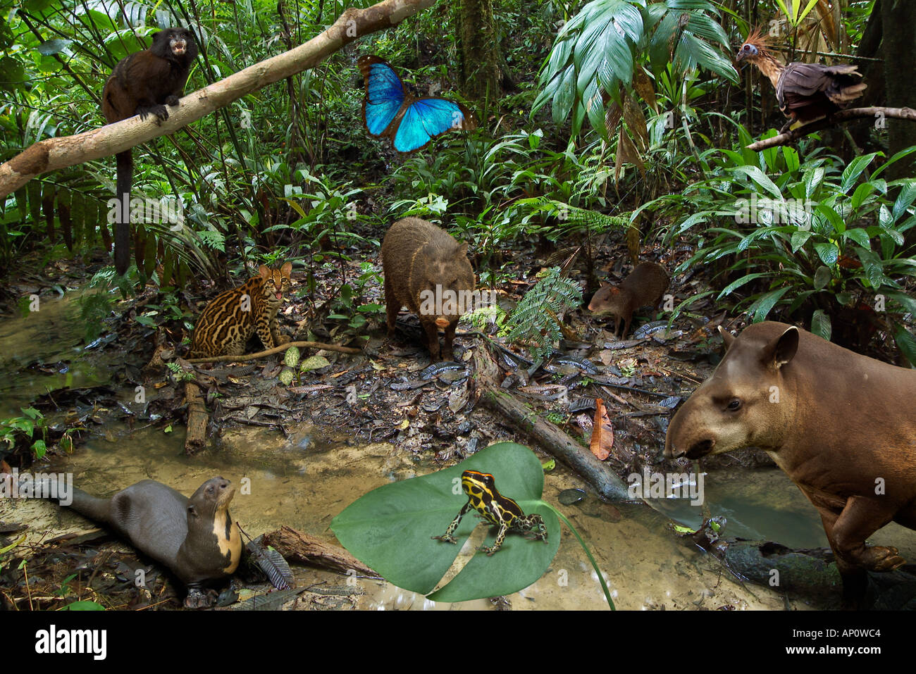 rainforest animals stock photos rainforest animals stock images