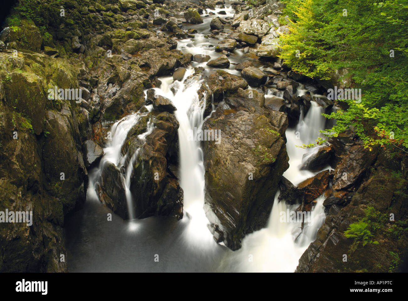 Black Linn Falls On The River Braan The Hermitage Dunkeld Perthshire Scotland UK - Stock Image