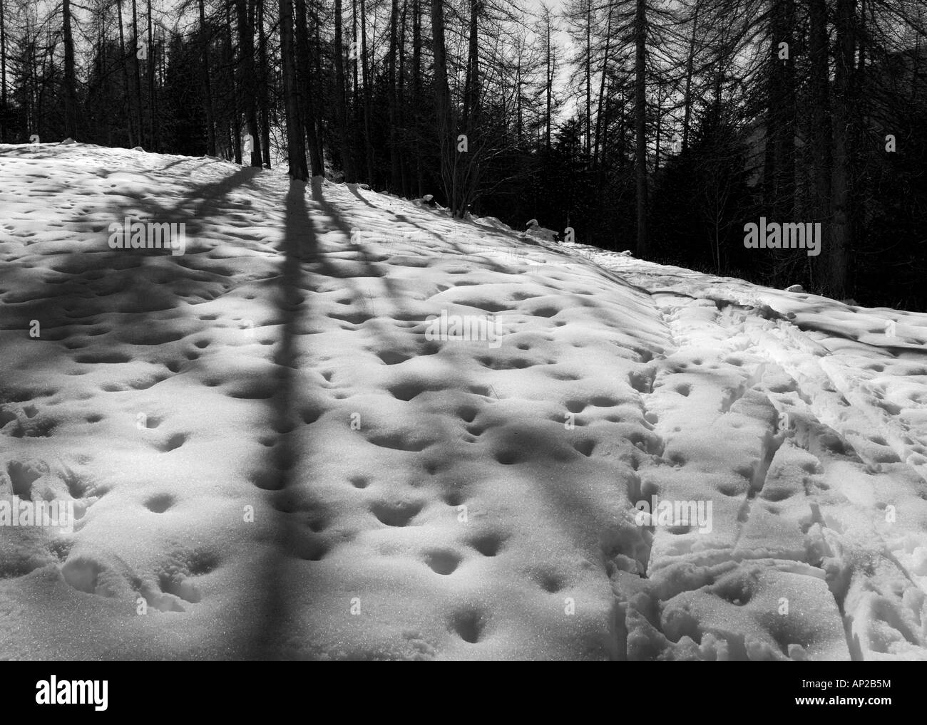 Sun leaving tree shadows in the snow on the top of Mt Gray, Northern Italy - Stock Image