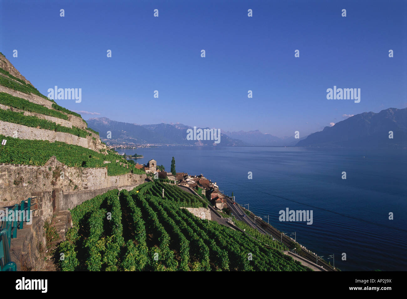 View of St. Saphorin and vineyards, Lake Geneva, Switzerland - Stock Image
