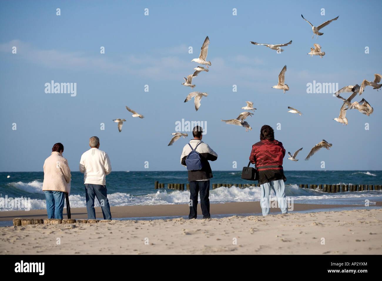 Seagull, Baltic Sea, Mecklenburg-Western Pomerania, Germany - Stock Image