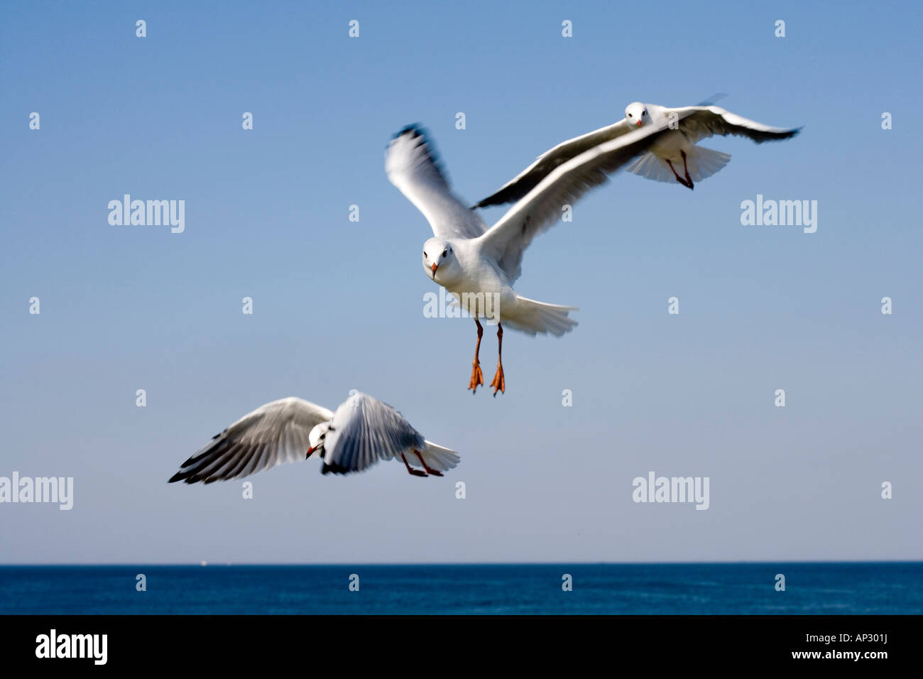 Seagulls, Ruegen, Mecklenburg-Western Pomerania, Germany - Stock Image