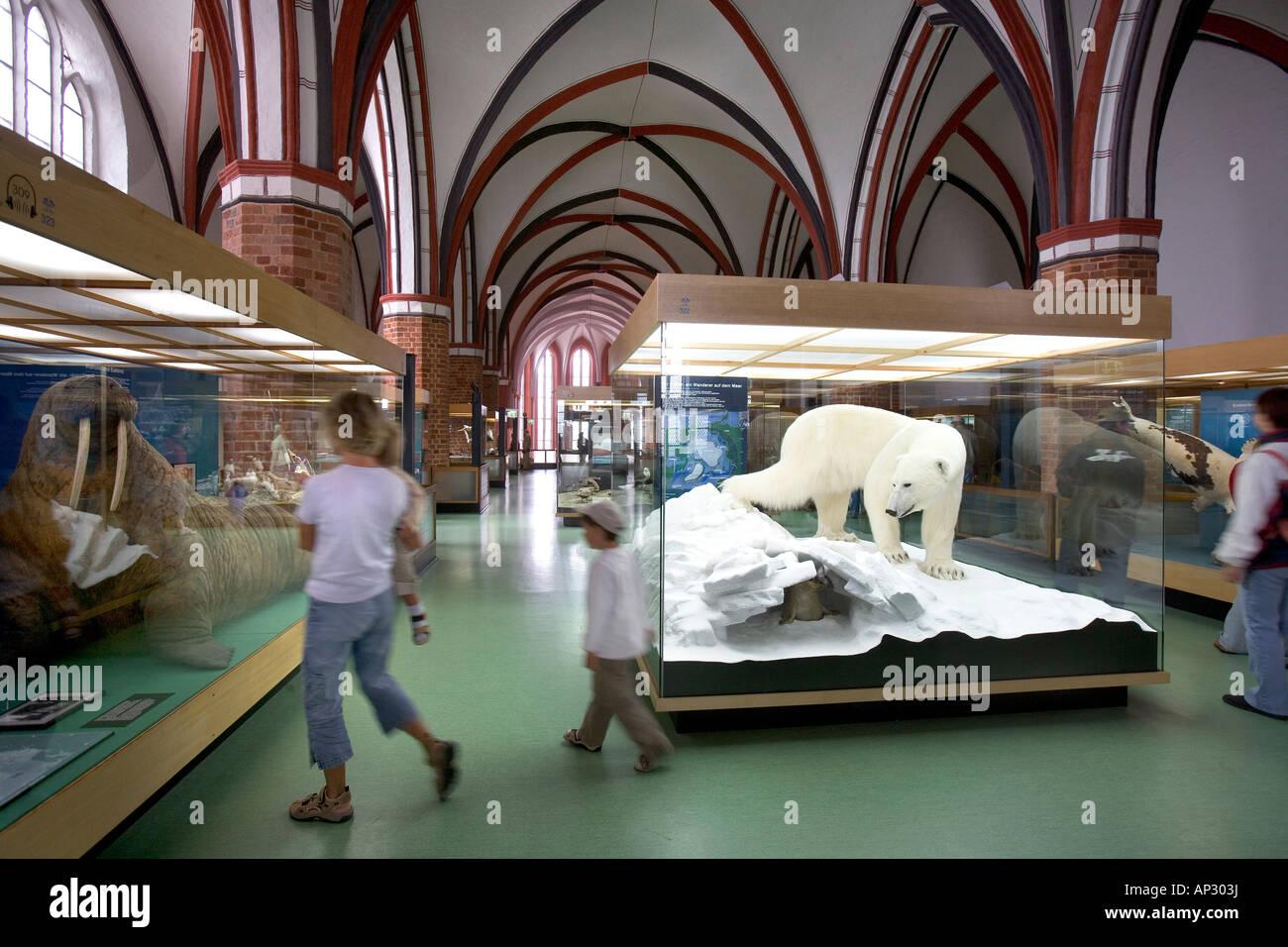 Oceanic Museum, Katharinen Cloister, Stralsund, Baltic Sea, Mecklenburg-Western Pomerania, Germany - Stock Image