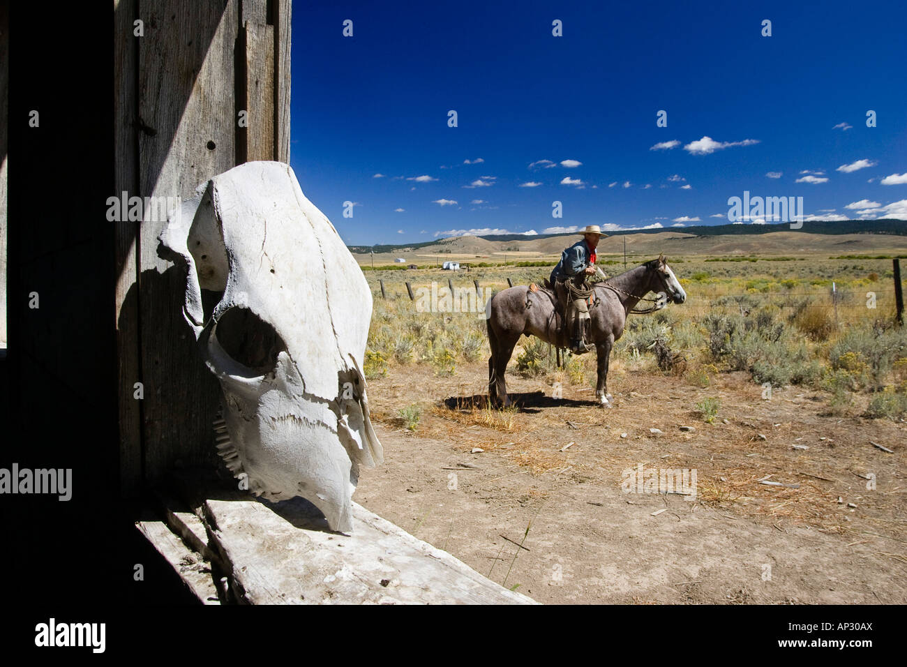 Cowboy with horse at barn, wildwest, Oregon, USA Stock Photo
