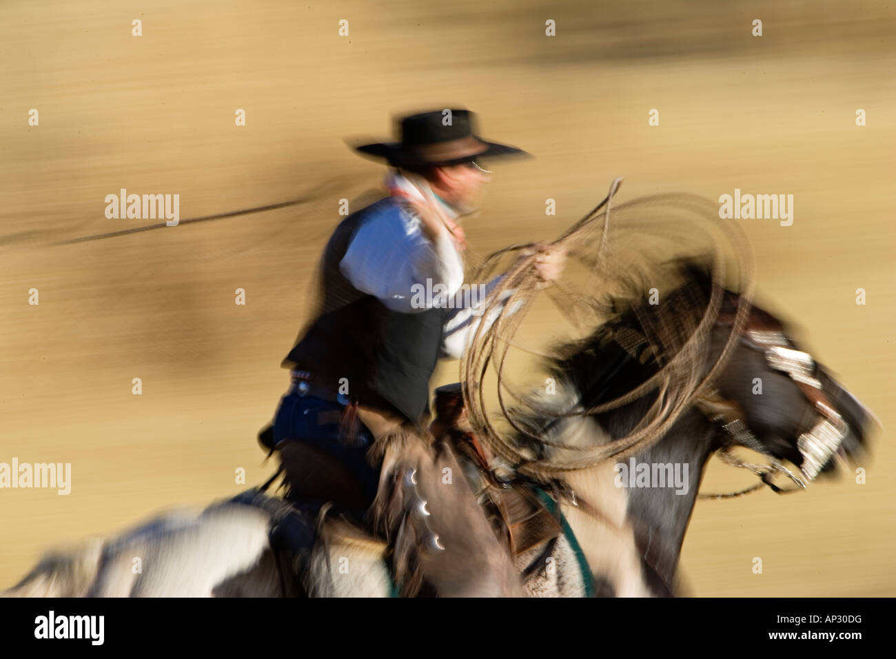 Cowboy riding and throwing lasso wildwest, Oregon USA - Stock Image