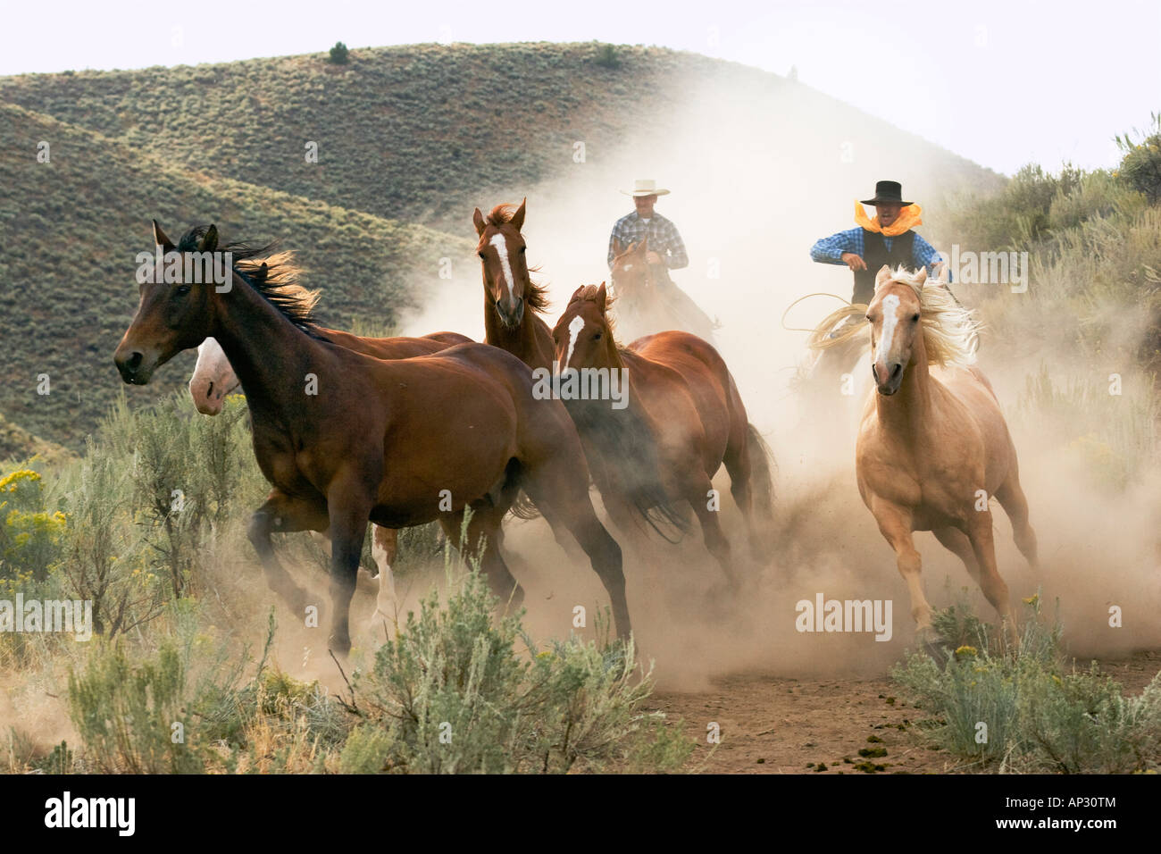 cowboy driving horses, wildwest, Oregon, USA Stock Photo