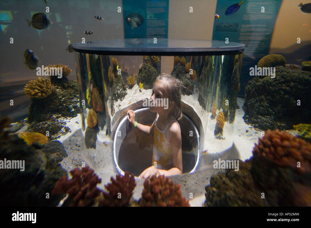 Girl admiring fishes in Atlantis Aquarium Attraction, Legoland, Billund, Central Jutland, Denmark - Stock Image