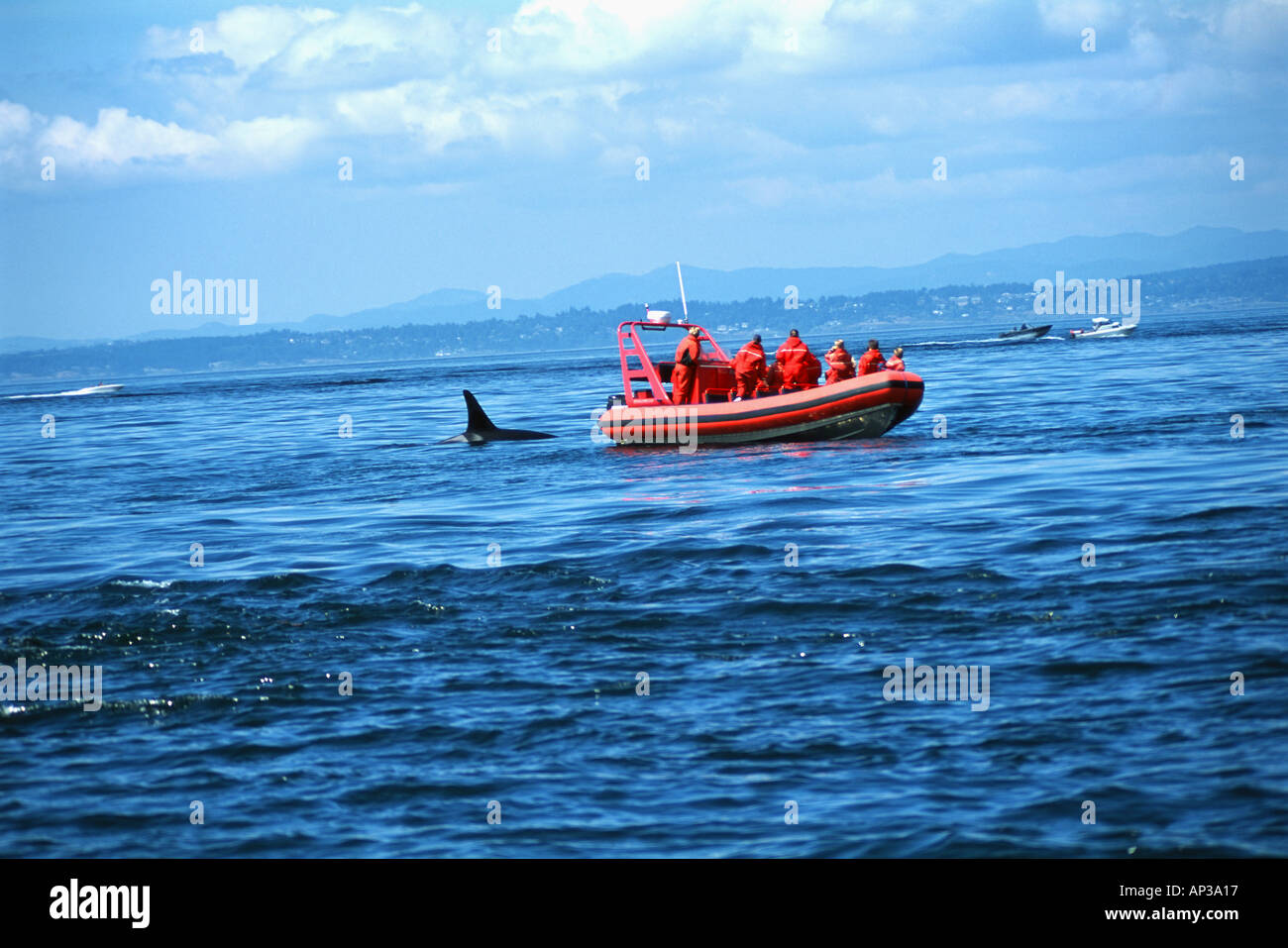 Whale watchers - Stock Image