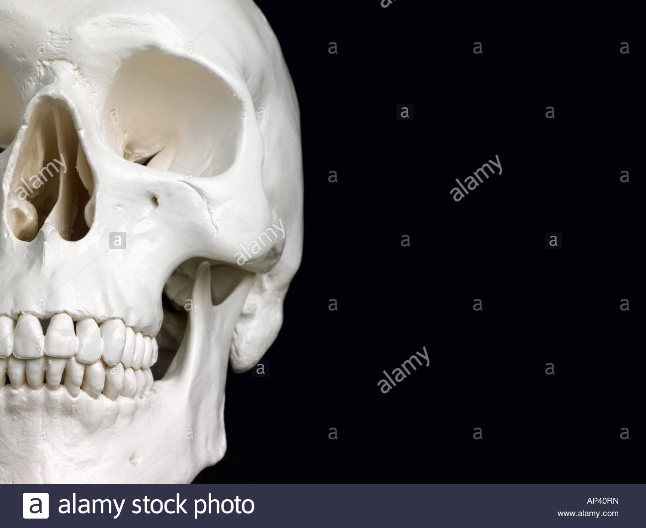 Half of a human skull - Stock Image