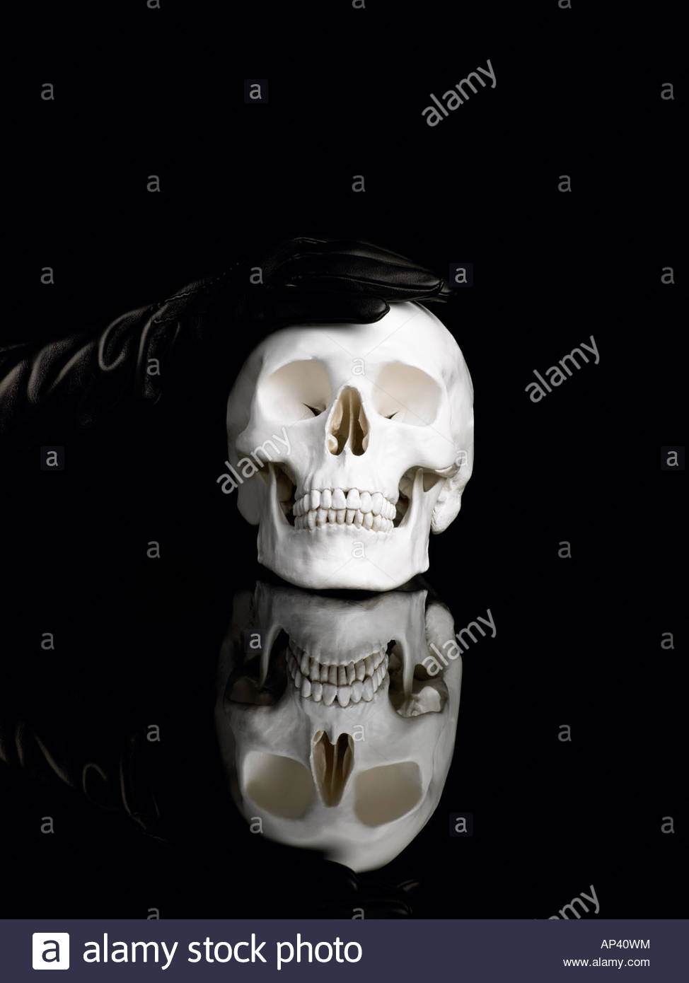 A gloved hand touching a human skull - Stock Image