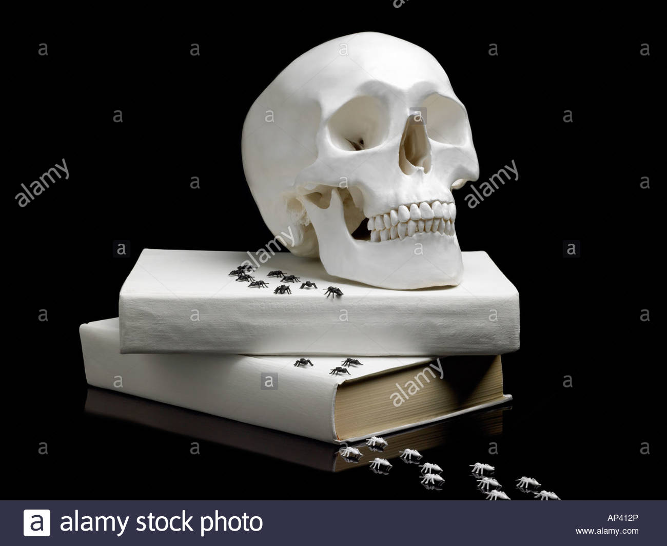 Human skull book and spiders Stock Photo