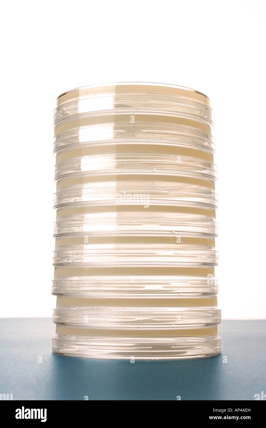 Petri dishes with clear agar - Stock Image
