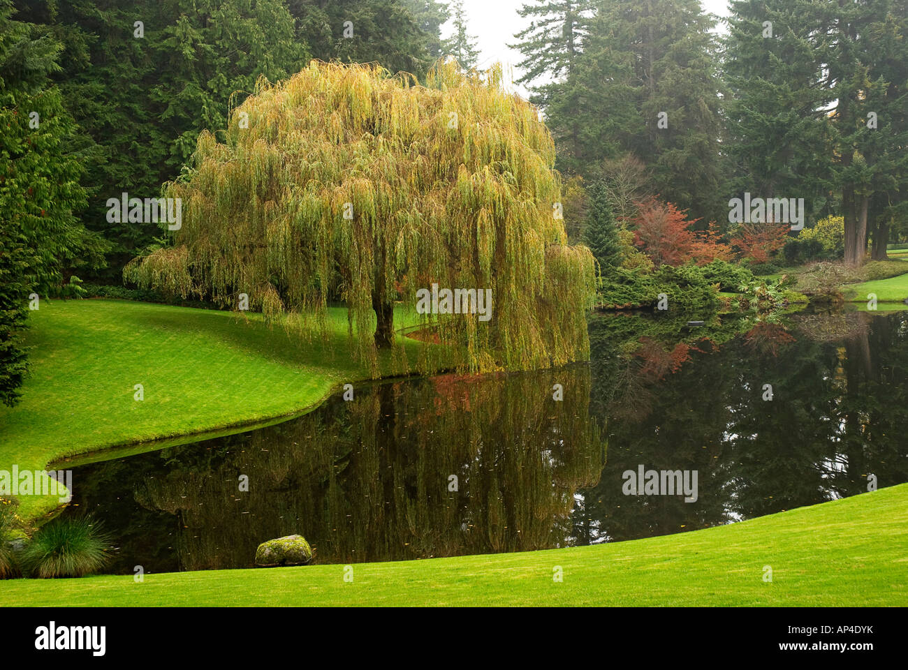 Garden Landscape With Pond At Bloedel Reserve Bainbridge Island WA