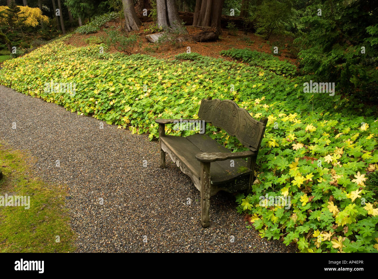 Garden Pathway With Bench At Bloedel Reserve On Bainbridge Island Washington