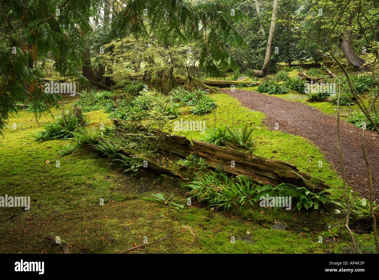 Downed Nursery Log In Moss Garden At Bloedel Reserve Bainbridge Island  Washington