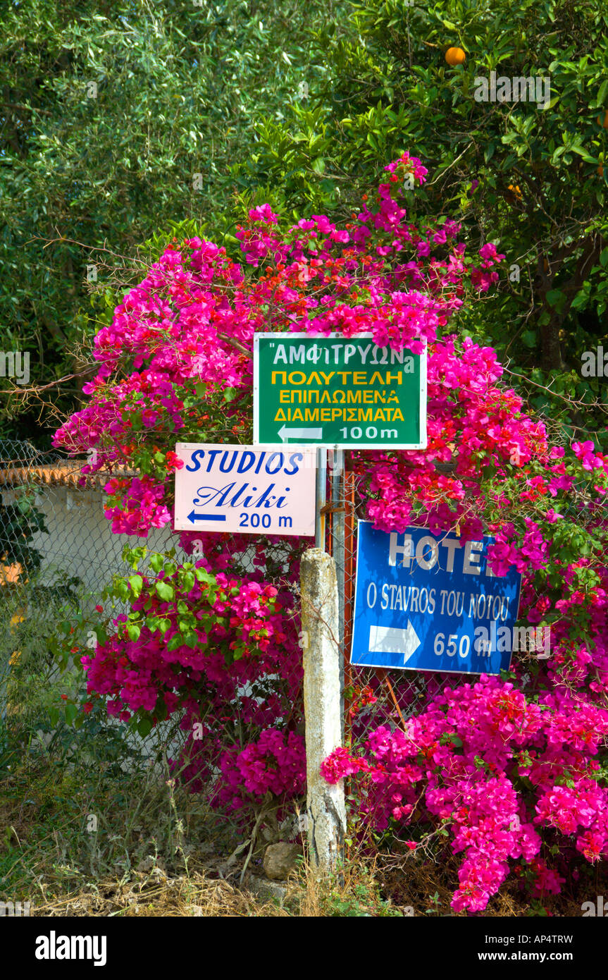 Bougainvillea flowers surround directional signs in the the fishing town of Githeo Greece Stock Photo