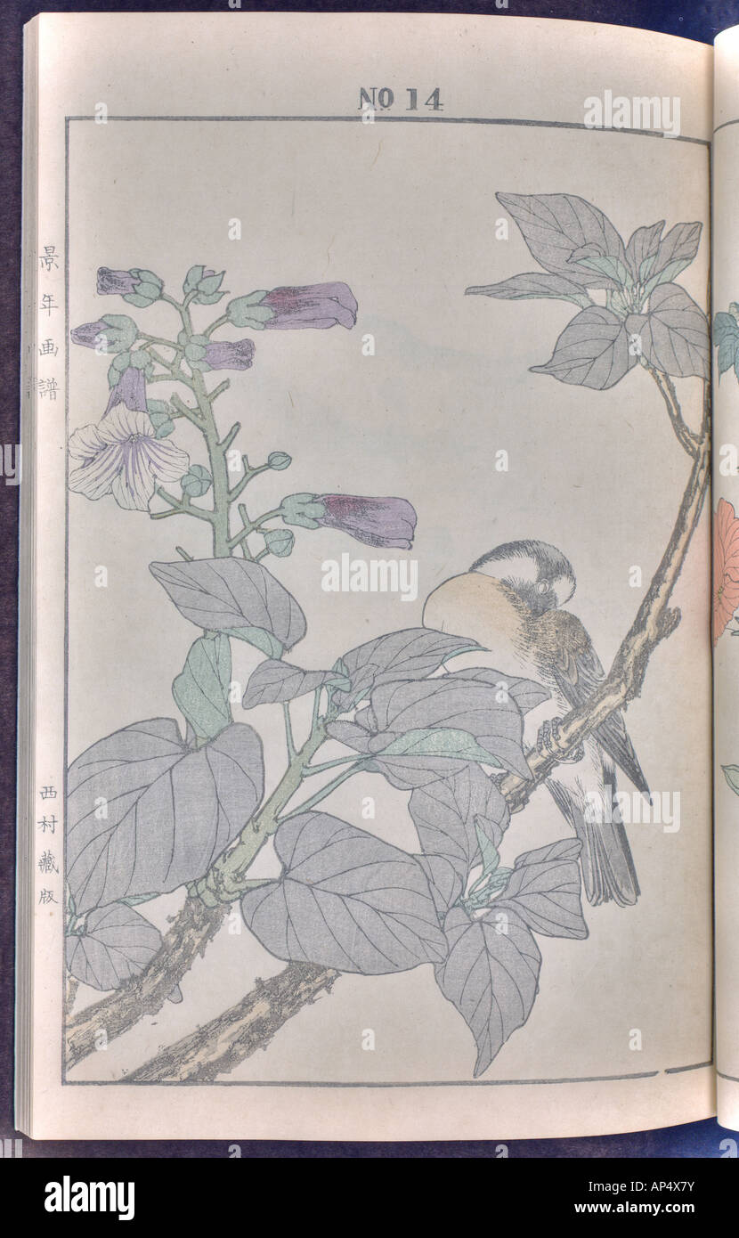 Bird and flower illustrations by Keinen: summer 1891 page 23 - Stock Image