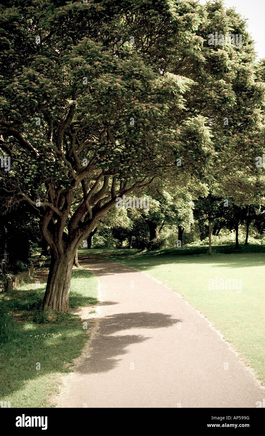 A tree and path, on a hot summers day in the Dodder park in Miltown, Dublin 6, Ireland. - Stock Image