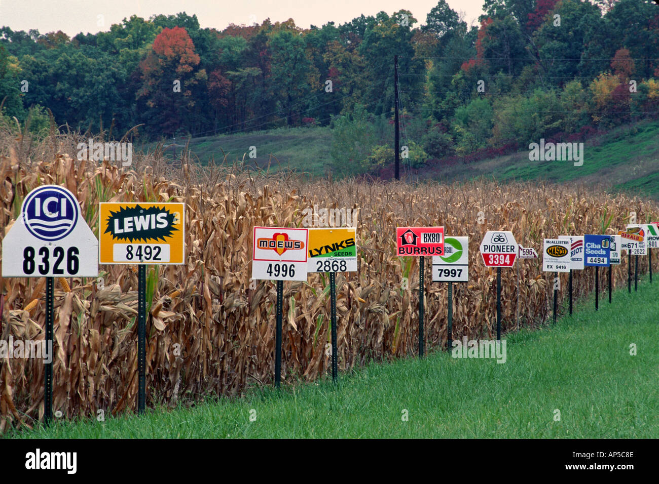 Test cornfield with corn seed brand signs identifying different seed strains Alexandria Missouri Stock Photo