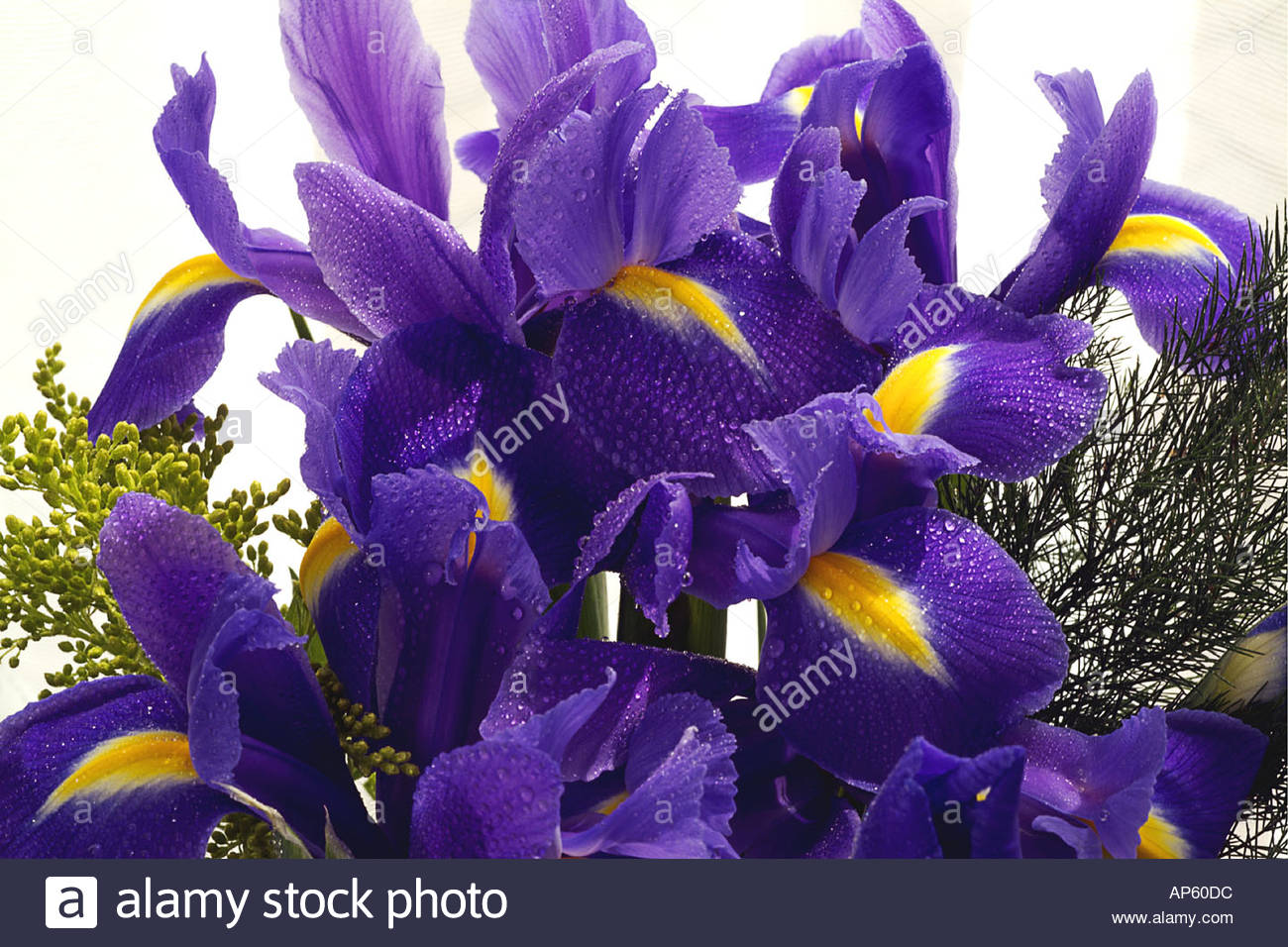 Iris Flower Arrangement Stock Photos Iris Flower Arrangement Stock