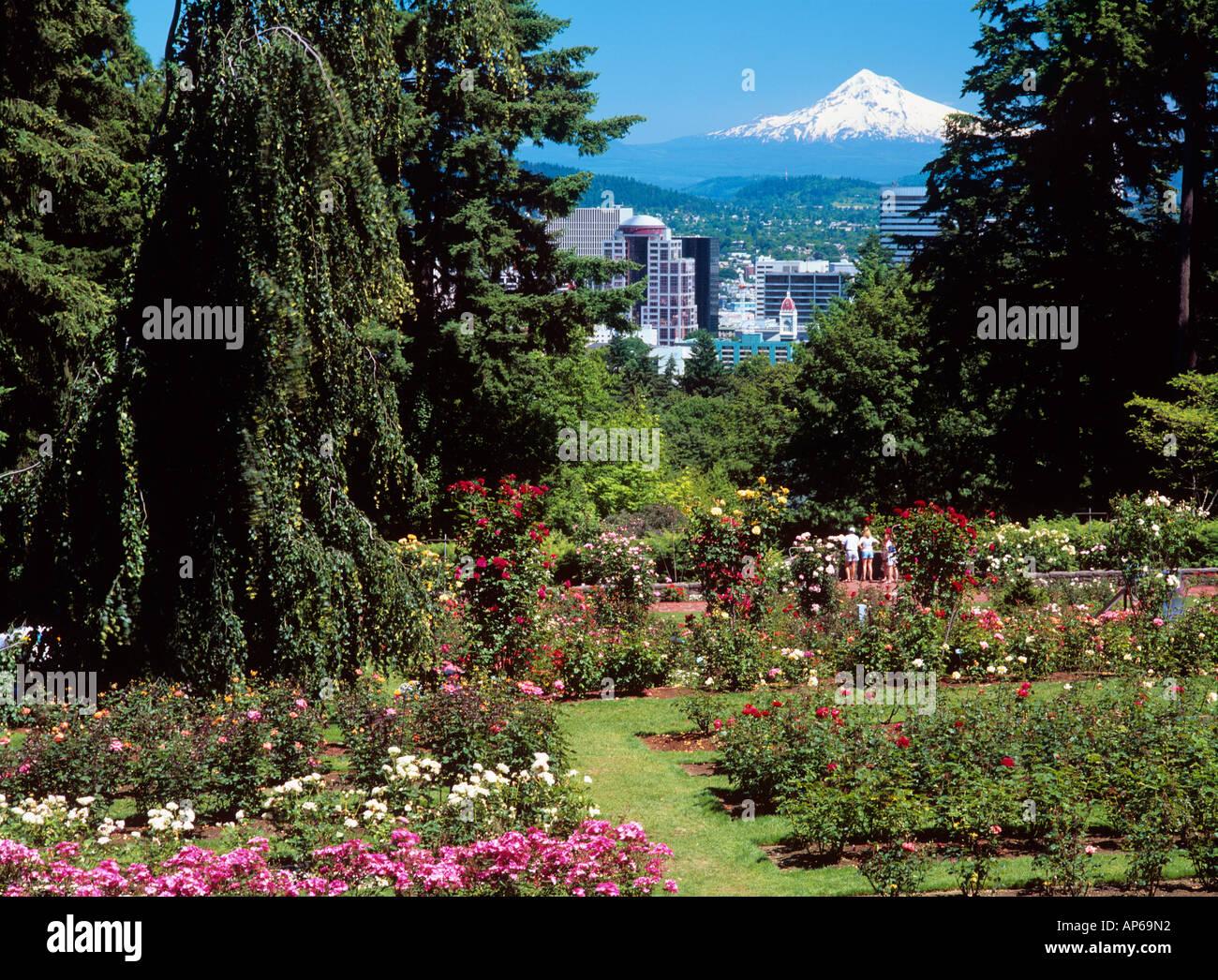 Usa Oregon Portland Rose Garden In Washington Park Stock Photo