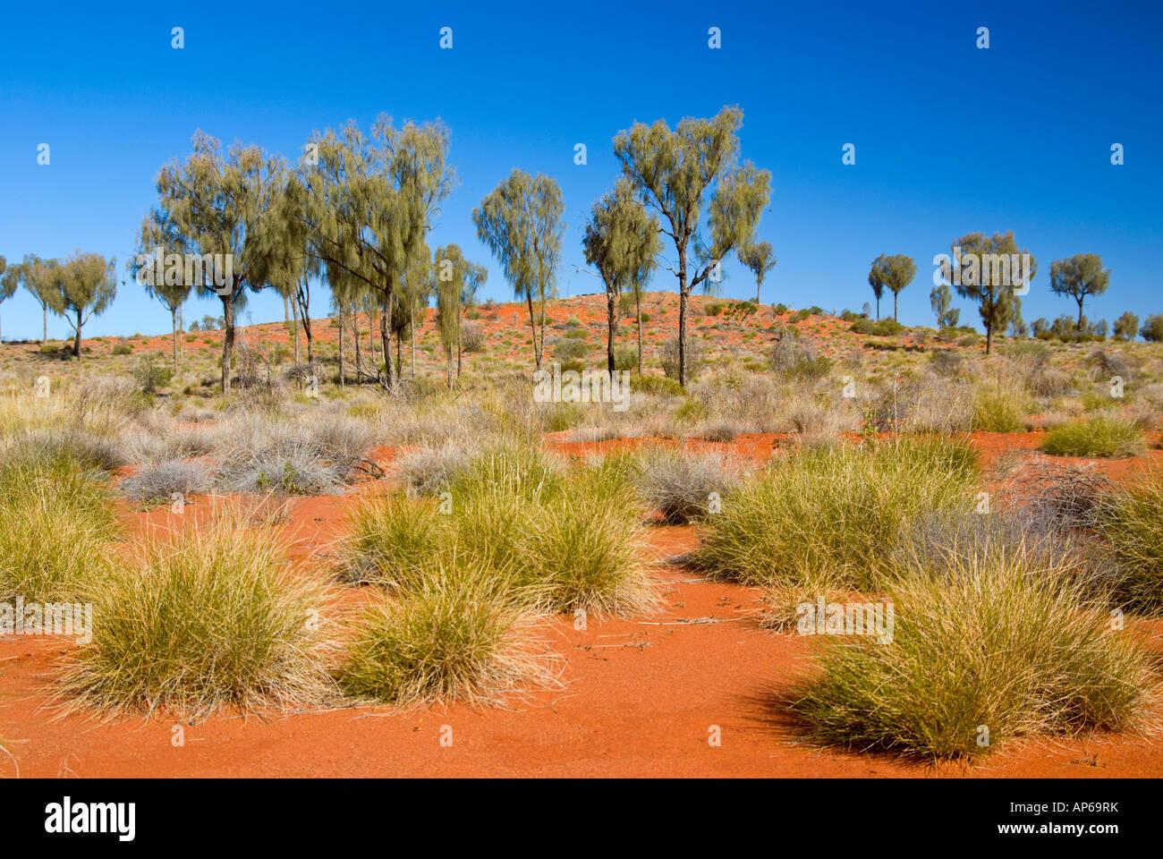 Desert Oak Woodland - Stock Image