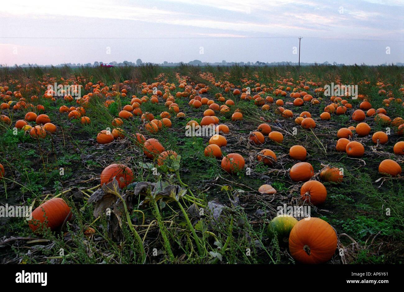 pumpkin patch boston lincs