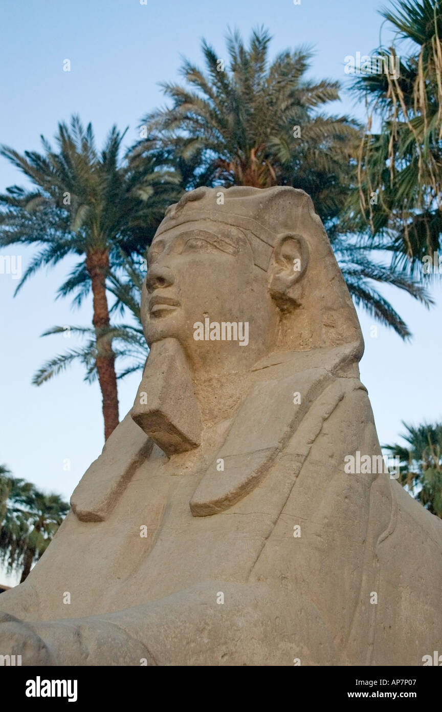 Avenue of Sphinxes, Luxor Temple, Thebes, Upper Egypt, Middle East. DSC 4610 Stock Photo
