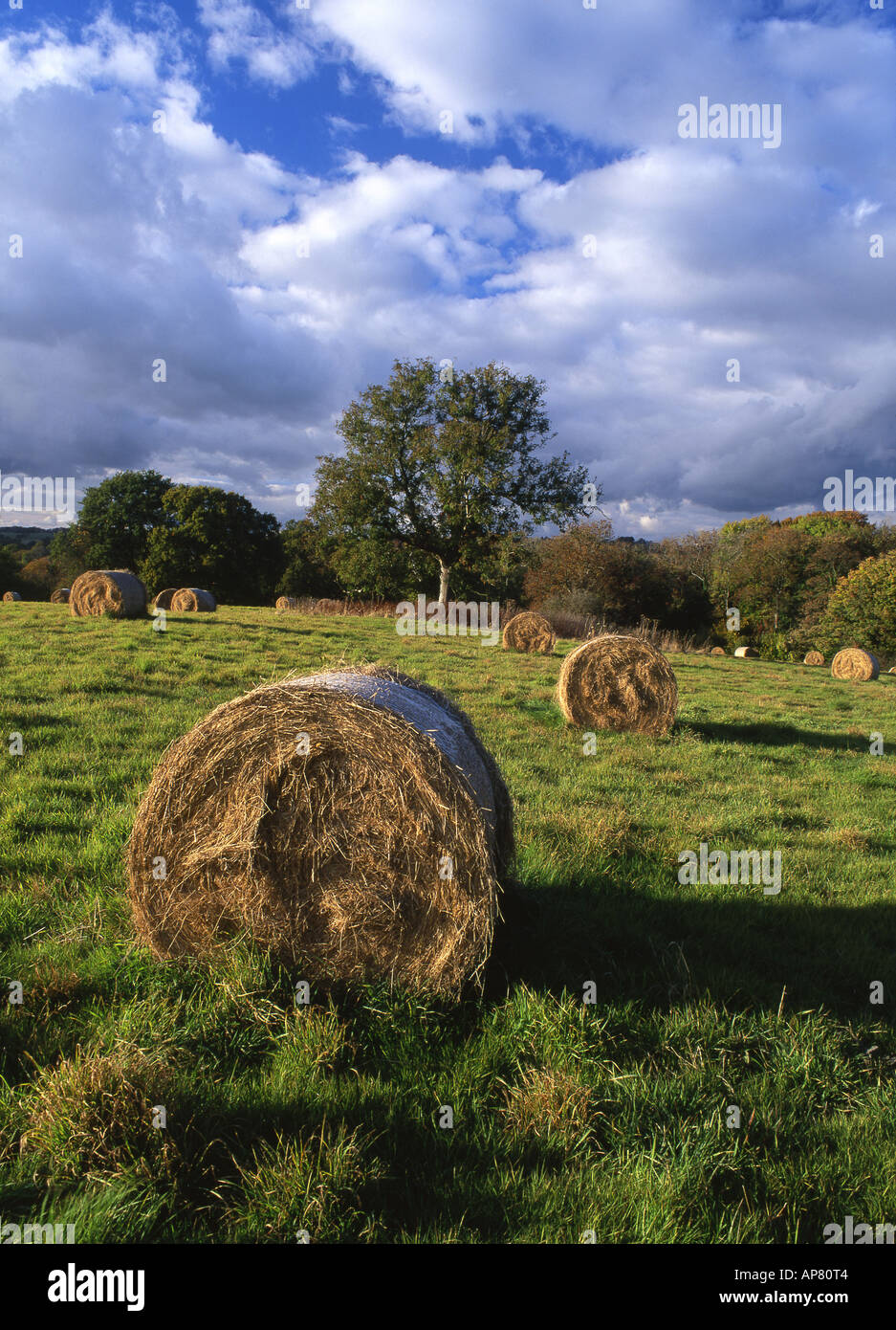 Hayfield Vale of Glamorgan Wales UK - Stock Image