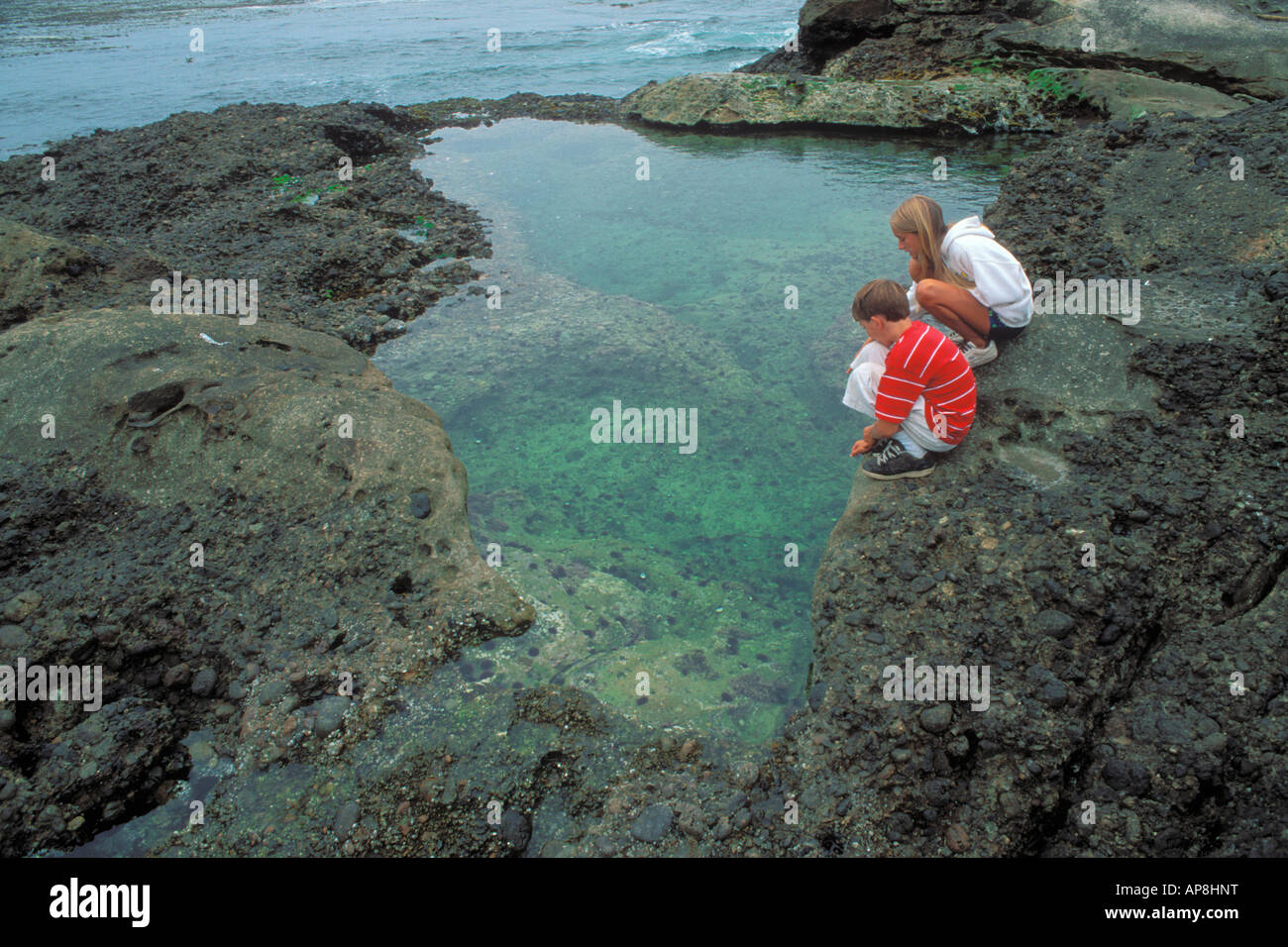 Kids age 8 12 exploring a tidepool at Weston Beach Point Lobos State Reserve California - Stock Image