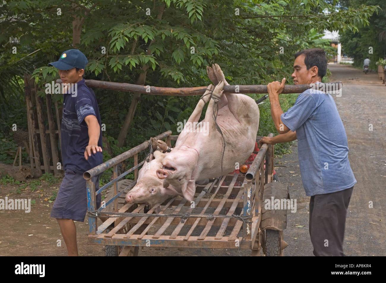 Cambodia Mekong River Peam Chikang Men Carrying Pig To Slaughter