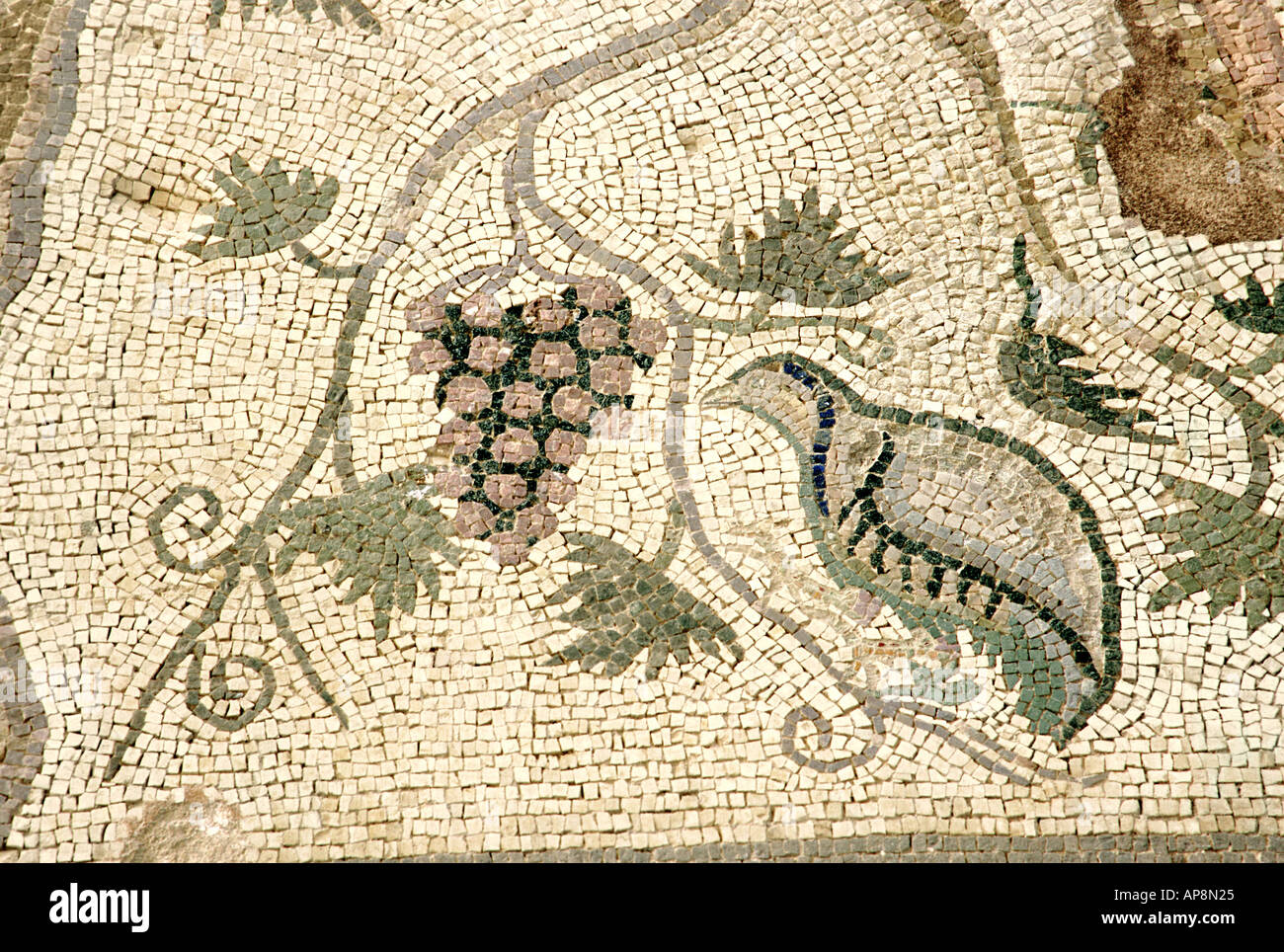 Mosaic of partridge and bunch of grapes ancient Roman Villa at Paphos Cyprus - Stock Image