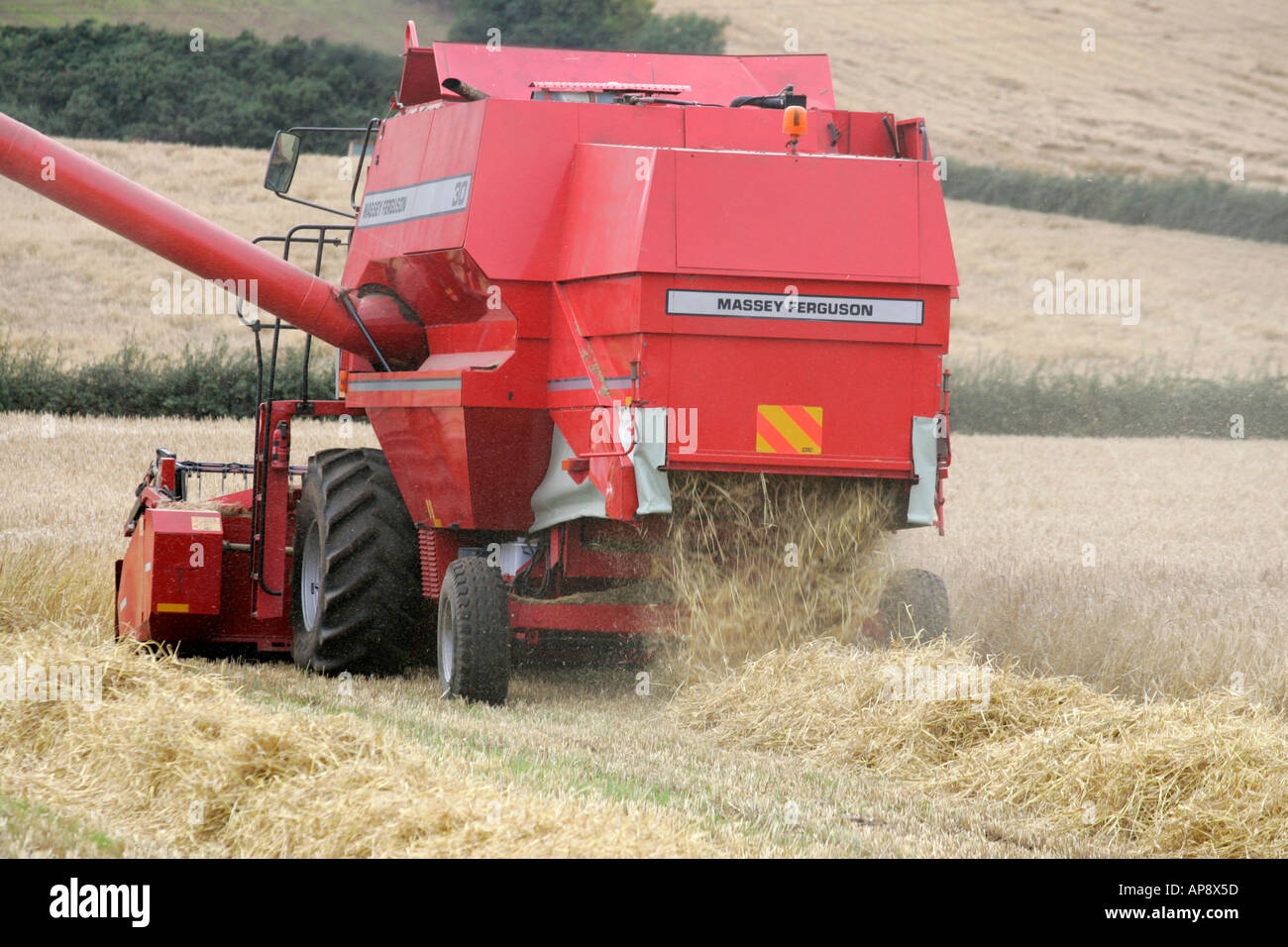 rear of Massey Ferguson red combine harvester in wheat field leaving straw lines newtownards county down northern ireland - Stock Image