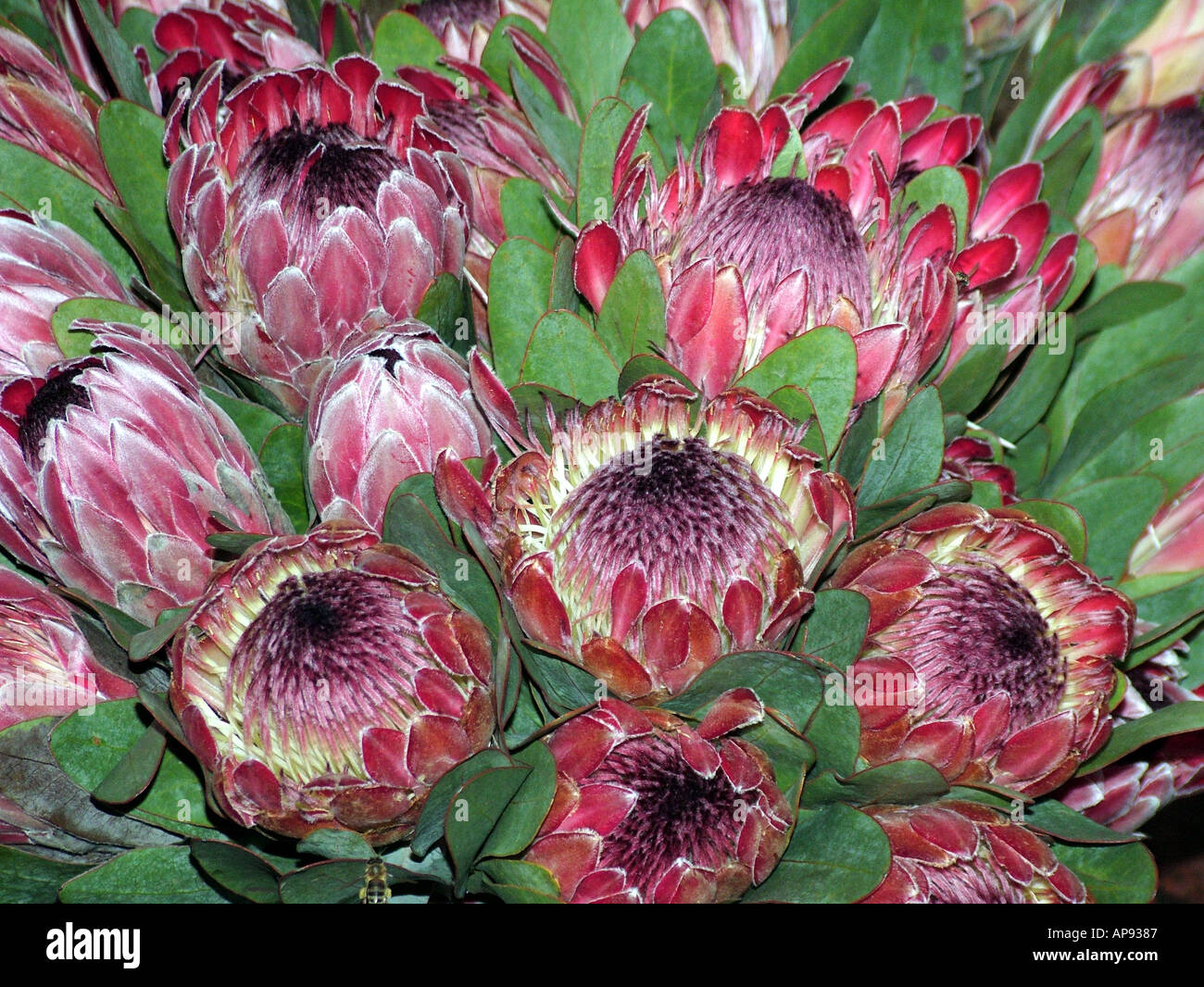 flowers for sale south africa stock photos flowers for sale south