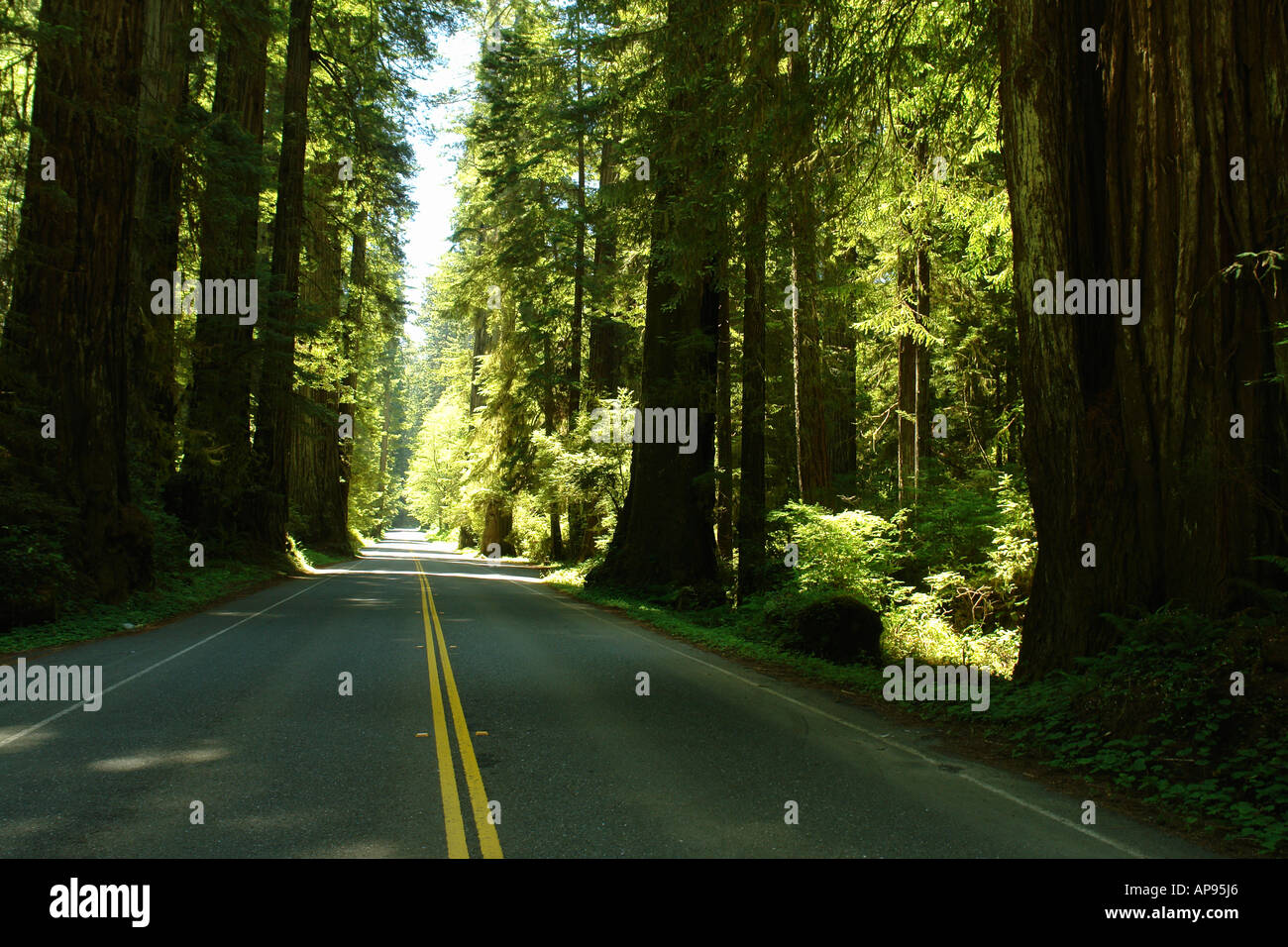 AJD51306, CA, California, Pacific Ocean, Redwood National and State Parks, Prairie Creek Redwoods State Park, road - Stock Image