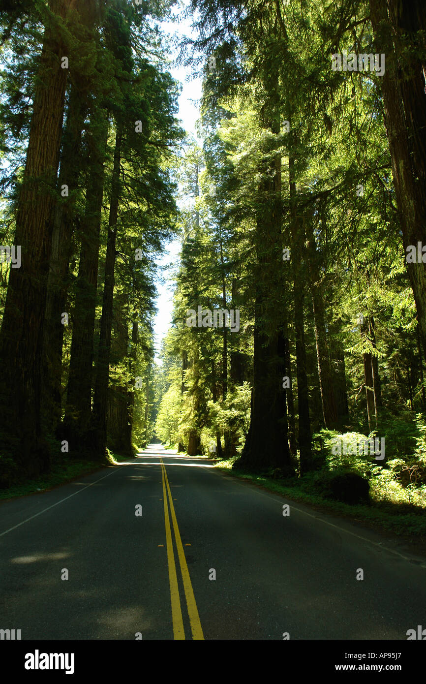 AJD51307, CA, California, Pacific Ocean, Redwood National and State Parks, Prairie Creek Redwoods State Park, road - Stock Image